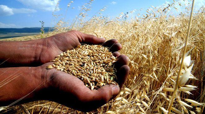 Türkiye`ye Bitcoin ile buğday