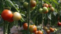 Türkiye`nin yaş meyve ve sebze ihracatında artış