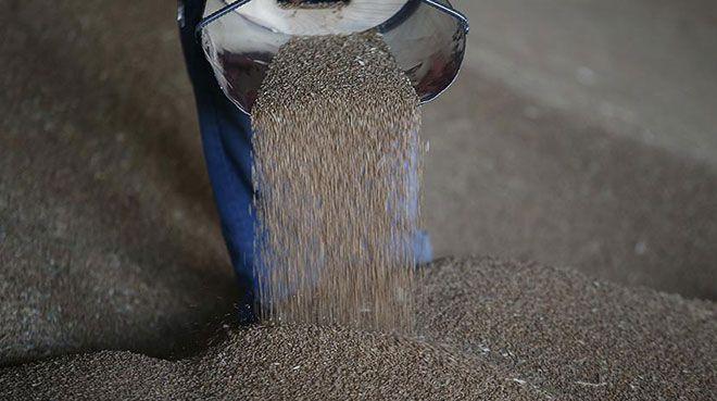 `Buğday üretimi ihtiyacı karşılamaya yetiyor`